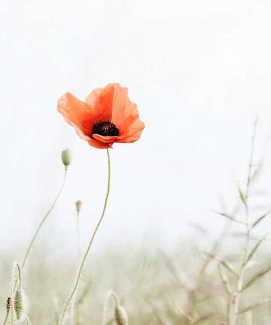 unikon kukka